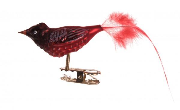Roter Kardinal, klein